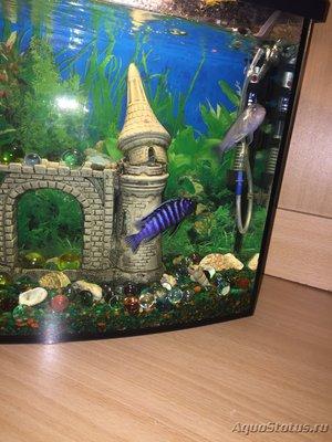 Помогите опознать этих рыб - IMG_3146.JPG