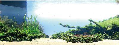 Аквариумные растения - опознание растений. - что за растение это же место при запуске.PNG