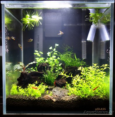 Аквариум-нанокуб Вишневый сад 10 литров Бошетунмай  - DSC0888811.JPG